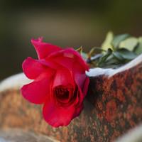 Kontakt, Friedhofsgärtner, Blumen Schurig